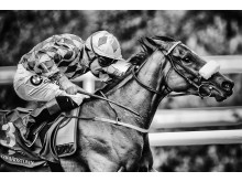 Alan Crowhurst - Leopardstown (6)