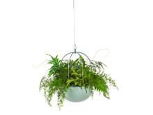 Cacti ampel / hanging basket , design Anki Gneib