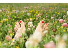 Sommerklare føtter i blomstereng     ((c) crestock)