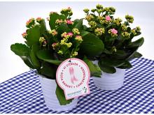 Dagens Rosa Produkt 8 oktober - en Calandiva från Mäster Grön