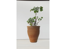 kruka Officinalis från terra Collection