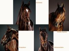 Årets häst_2020