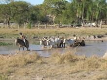 Farming in Llanos de Mojos, Bolivia