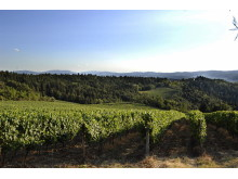 Melini Vineyards i Toscana