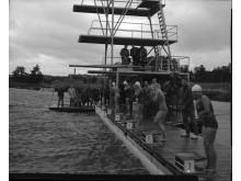 SM i simning 1958