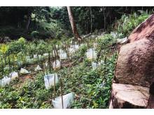 3500 nya plantor i Hiniduma