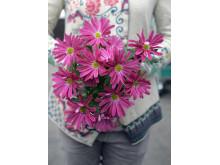 Chrysanthemum till alla hjärtans dag