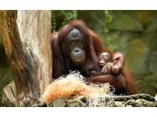 PI-Zoo-DARWINEUM-72-2017_Taufe_Hsiao-Ning_Niah_Zoo Rostock_Kloock_02