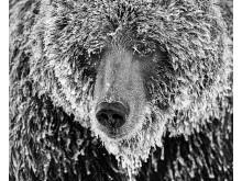 © marko Dimitrijevic, Switzerland, Shortlist, Professional competition, Natural World & Wildlife, 2020 Sony World Photography Awards