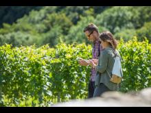 Spaziergang in den Weinbergen mit der App