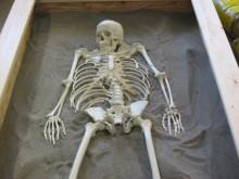 Udgrav et skelet