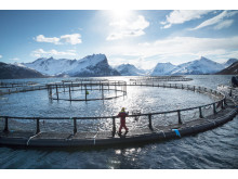 Laksemerd i Nord-Norge - salmon cages in Northern Norway