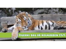 Tigerns dag på Kolmården