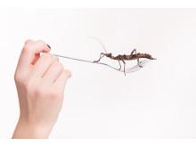 Insekter som måltid