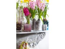 Blommande vårlökar i udda glaskrukor