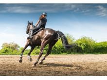 HorseRiderAction