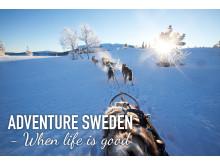 Dog sledding - Adventure Sweden