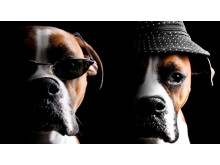 Happy Dog - fyrverkerifritt nyårsfirande på Claron Hotel Arlanda Airport