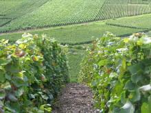 Palmer & Co_Kooperativ med hundratals vinodlare 2