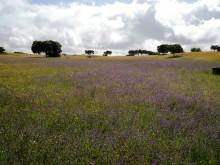 Ramblers Walking Holidays: Portuguese Way to Santiago