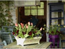 Bordsdekoration med lökväxter