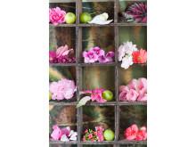 Svenskodlade rosa krukväxter från Mäster Grön