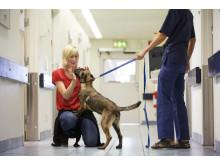 Djursjukvård