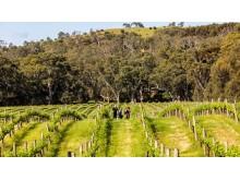 Gemtree wines