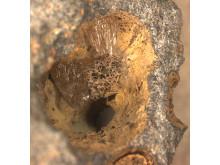 Fossil lång nere i berggrunden