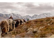 Yak-Trekking Wallis
