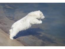 Ranua Polar Bear Cub 8