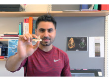 The lead author Mohamad Bazzi holding a lamniform shark tooth.
