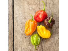 7984_habanero_colormix_low