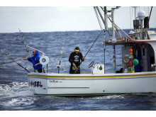 Wicked Tuna - Nord mod Syd