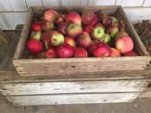 Äpplets Dag 25 september