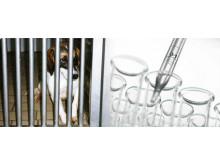Moderna djurfria metoder ersätter fler och fler djurförsök