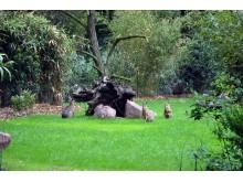 Zoo Leipzig - Große Maras