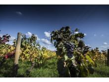 Bourgogne, Makalös mat