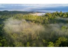 Cool Earths Rainforest Revolution