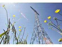 Grimeton Radiostation - Radiomast med blomster