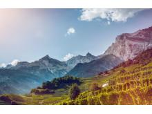 Weintourismus, Rebberge im Wallis Copyright: Valais Wallis Promotion - Christian Pfammatter