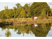 Trädallé längs Göta kanal, nya och gamla träd