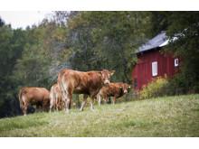 Lantbruk i Borgvik Grums kommun.