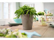 Grüne Tischdeko mit dem LECHUZA MINI-DELTINI