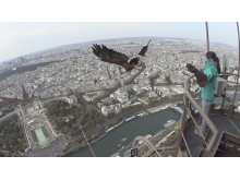 Action Cam eagle