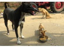 1905-WTG-Odisha-Soforthilfe-Welpe-Fütterung