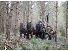 Lukas och hans ägare Lars-Åke Johansson möter riksdagsmän för att prata om hästens betydelse som miljövänligt alternativ