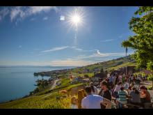 Weingebiet Lavaux im Genferseegebiet
