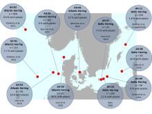 lokaliteter for og studier av plast i sild