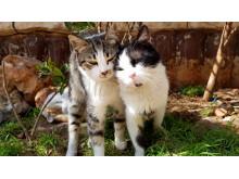 WTG-Syrien-Katzen